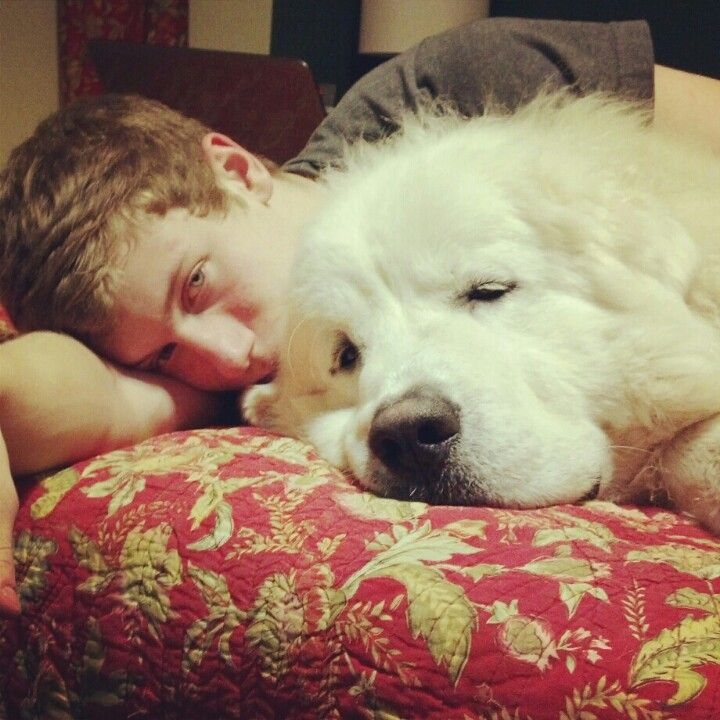 Casper Is A 1 Year Old Great Pyrenees This Is His Teenager