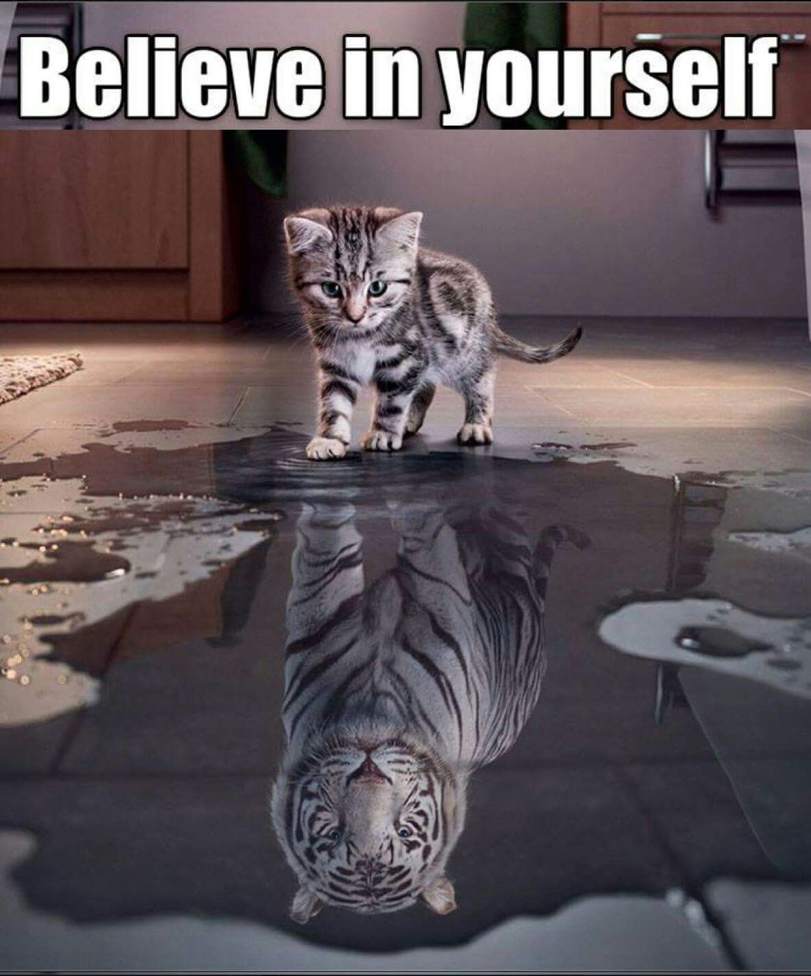 Believe in yourself Cute animals, Animals, Pets