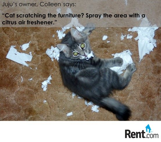 Pet Owner Tip: Citrus Spray Deters Cats From Scratching. Get More #tips For