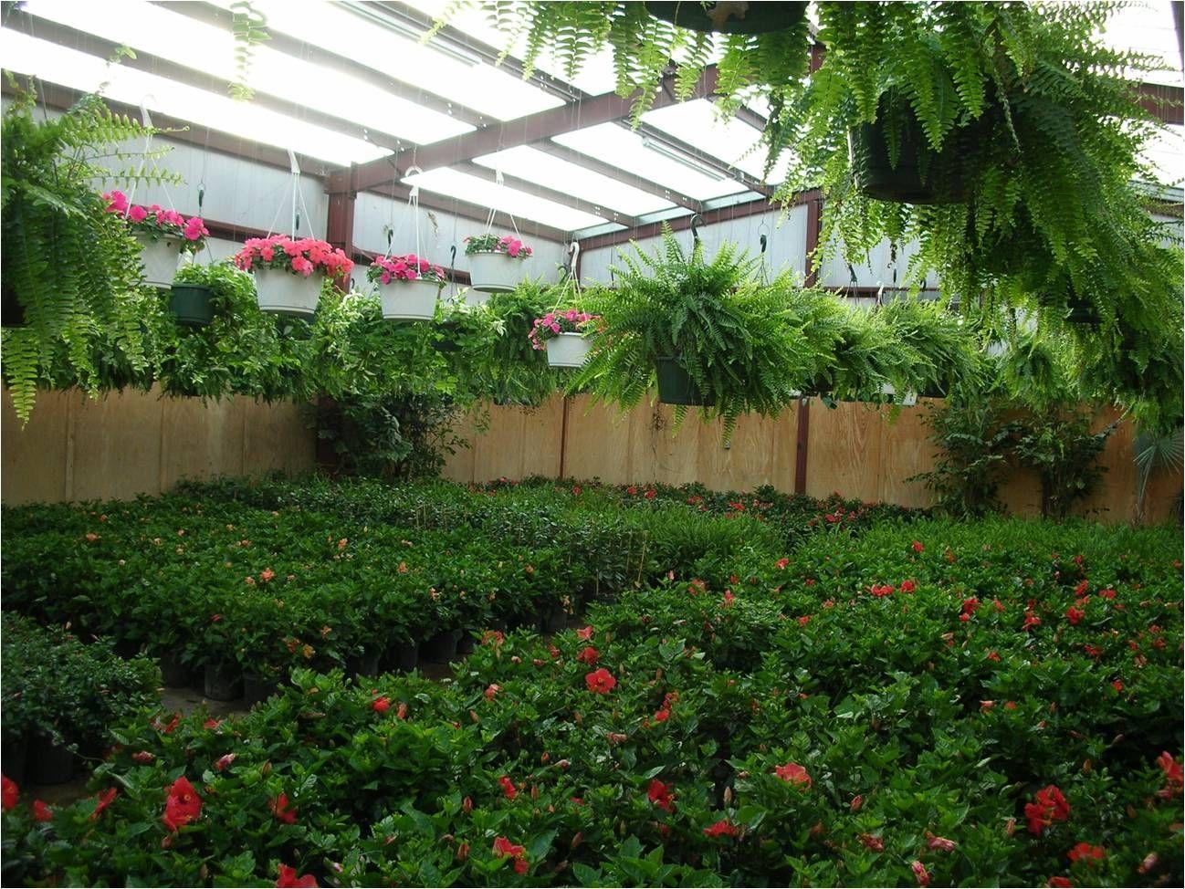 Perennials Cristina S Garden Center