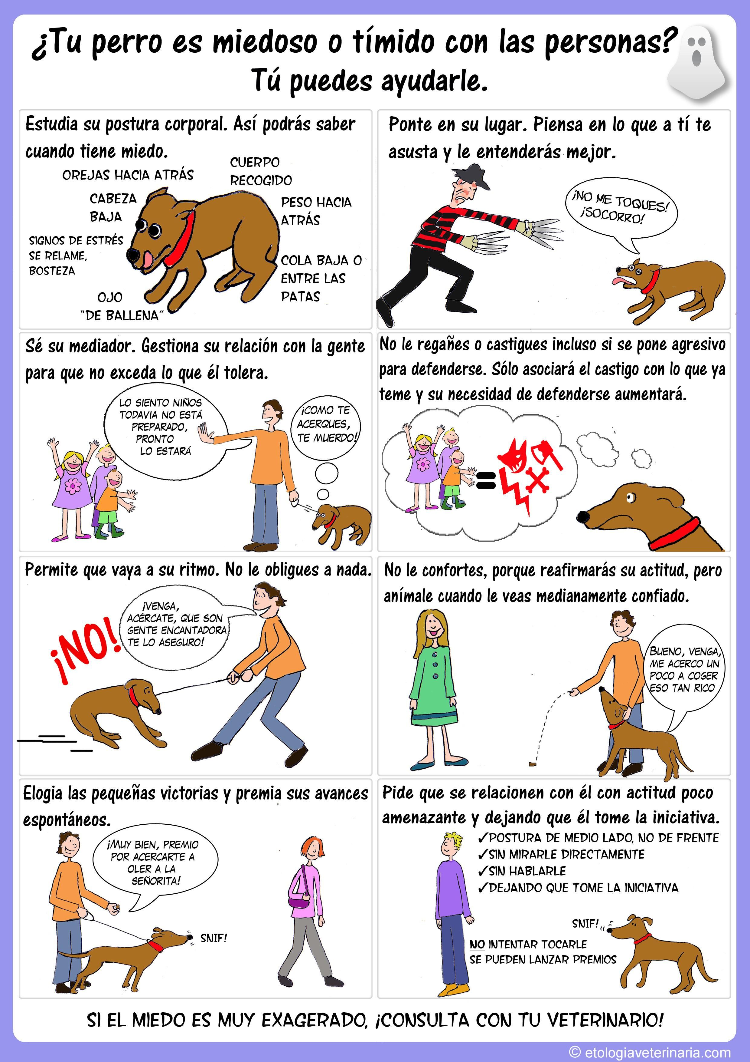 Infografía para ayudar a tu perro a quitarse el miedo o la timidez hacia a las personas