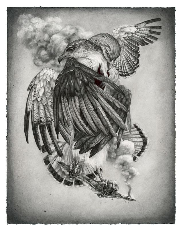 Grey Backed Hawk, Christina Mrozik Art, Tattoo illustration
