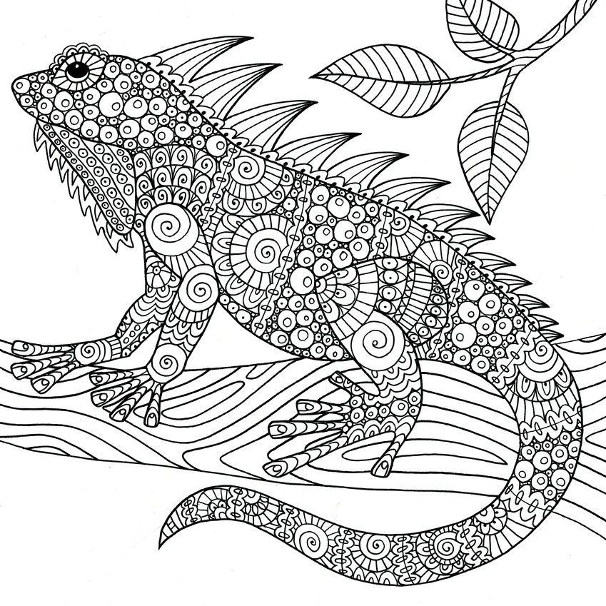 Wonders Of Creation Illustrations To Coloring And Inspire