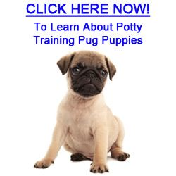 5 Tips On How To Potty Train Pug Puppies Pug Puppies Pugs Cat