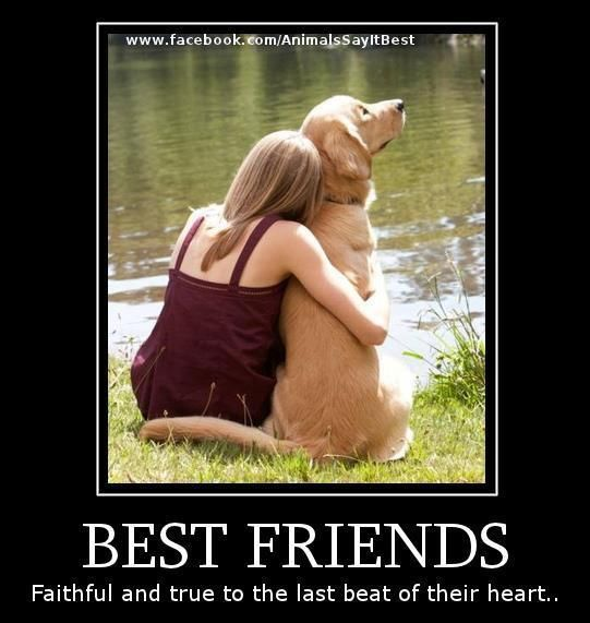 Best Friends Dogs Dogs Dog Care Dog Love