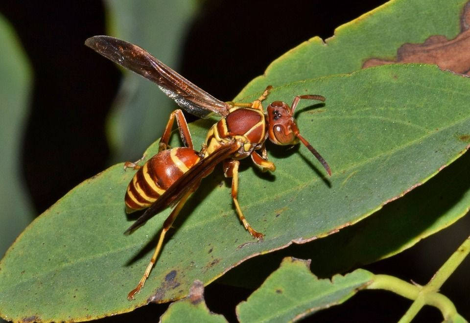 5 repellent plants to keep wasps away. Bugs, mosquitoes