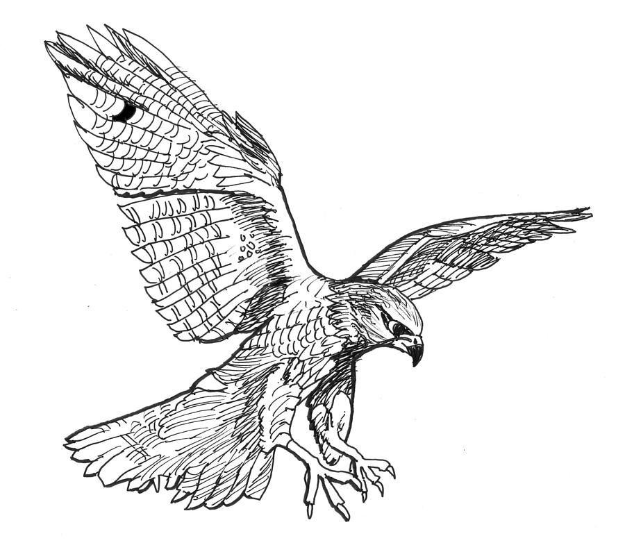 Falcon Drawing - Falcon Fine Art Print - David Burkart ... White Falcon Bird Tattoo