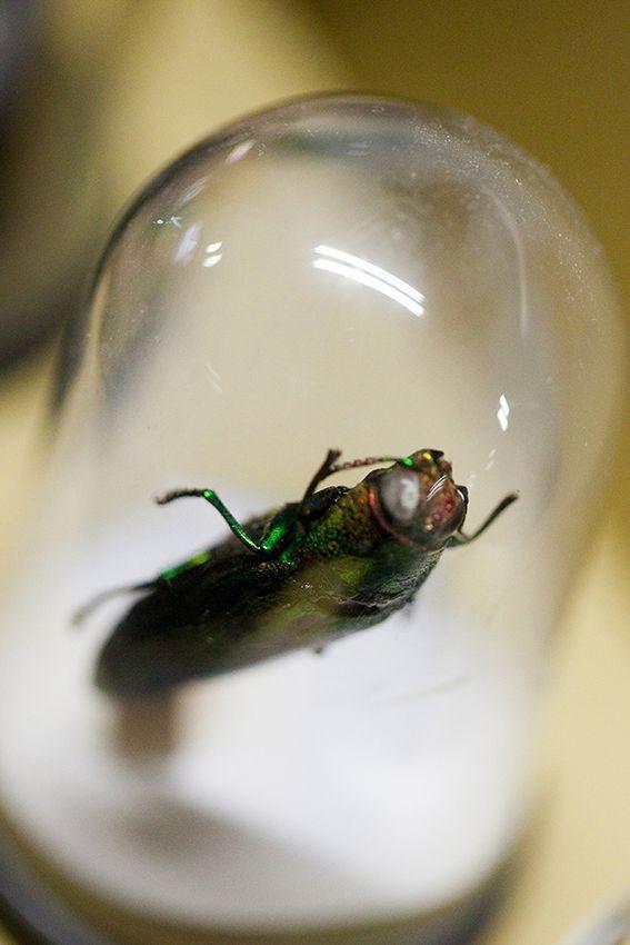 Artforum - project Insect - foto: Jan Sents