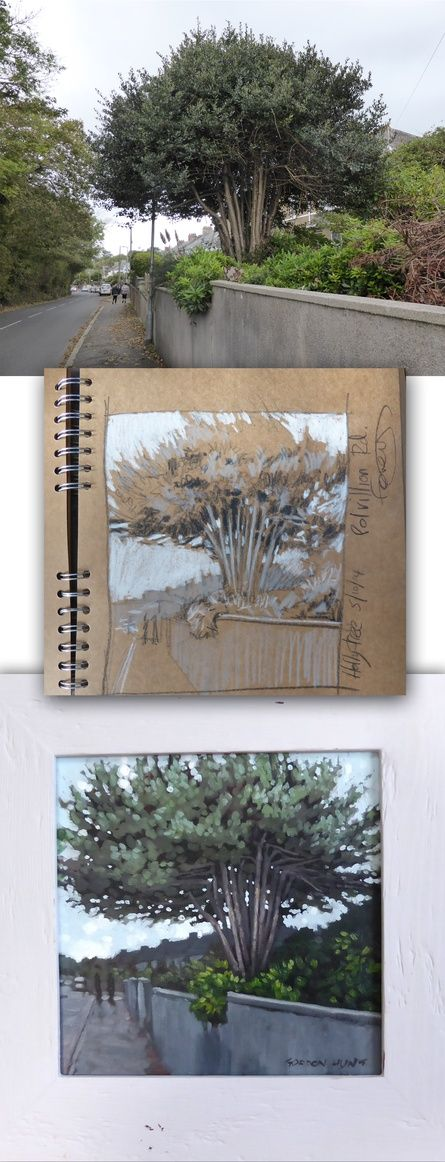 Holly tree - the photo, the sketch, the painting.