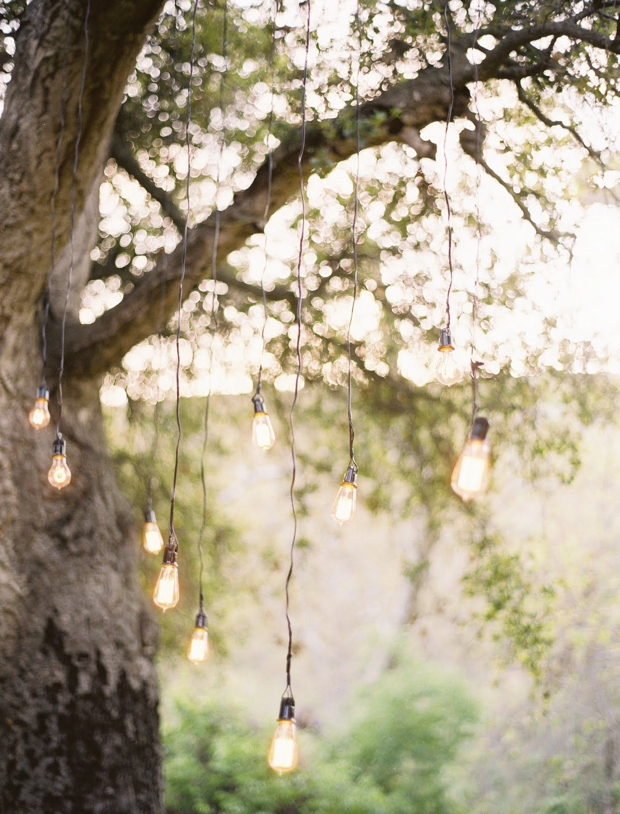 light bulbs hanging from trees wedding pinterest light bulb