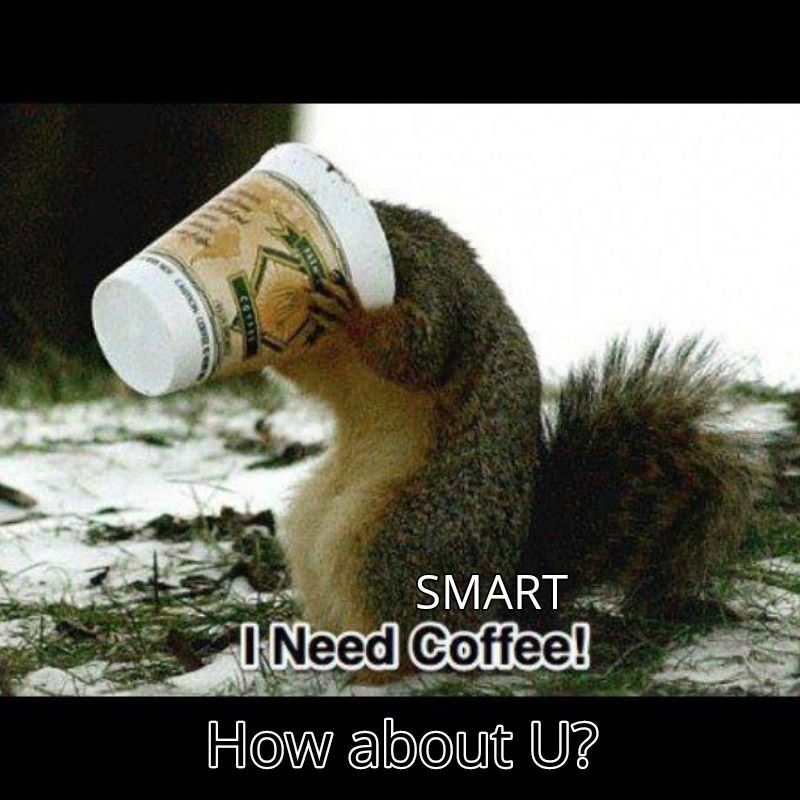 Stop feeling like a squirrel and get smart coffee in your