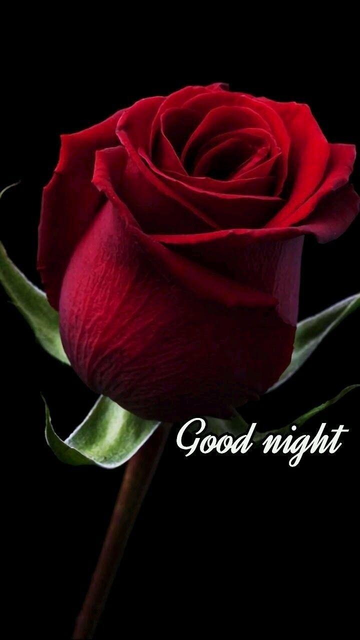 Good night beautiful red rose bud good night pics pinterest beautiful red rose bud izmirmasajfo