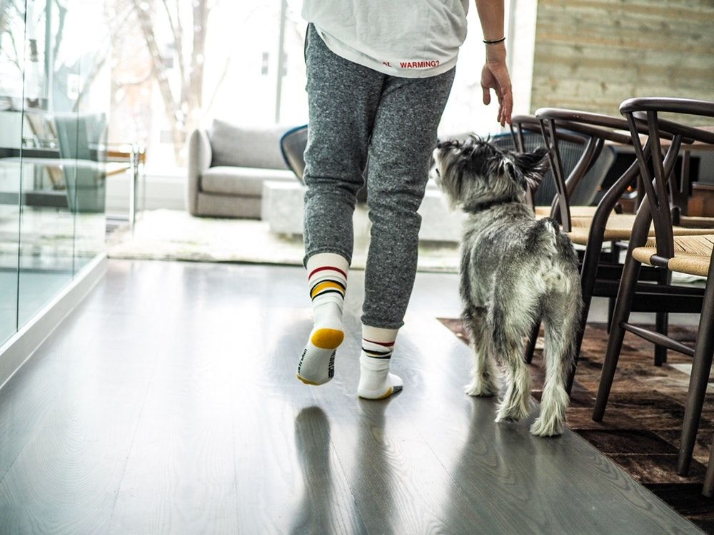 13+ Can a landlord deny an emotional support animal ideas