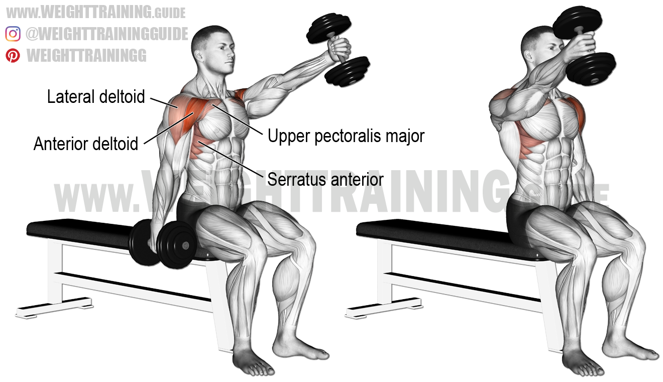 seated alternating dumbbell front raise  an isolation