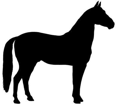 Equine Spray Paint