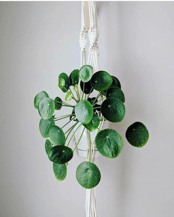 you can visit my web site to get more new screen hanging plants indoor livingroom love technology
