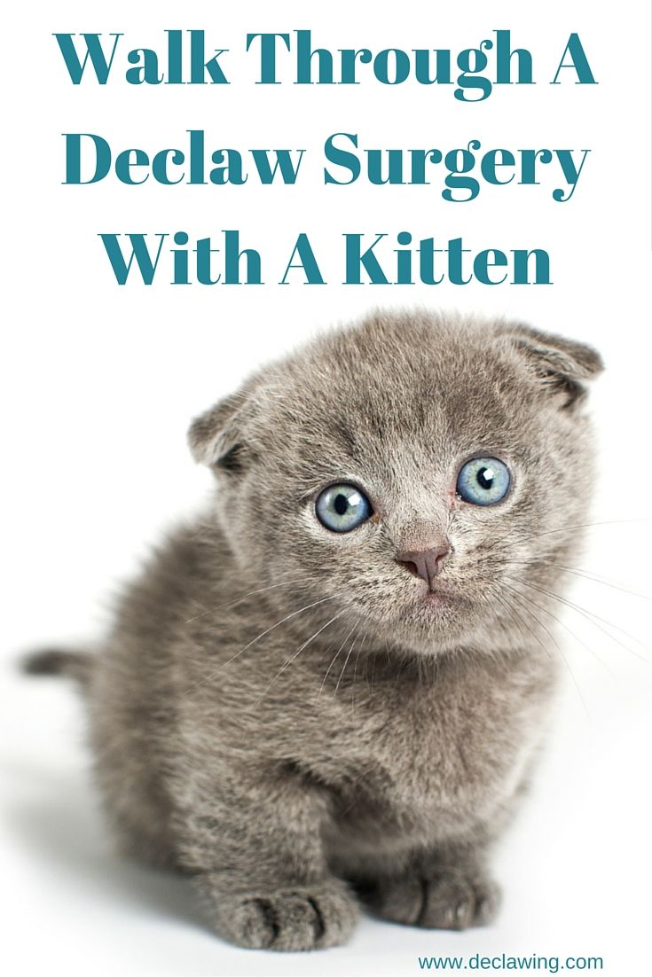 Why I Will Never Declaw Again Written By A Veterinarian Declawing Cats Declawing Cats Cat Health Kitten