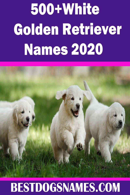 White Golden Retriever Names Femaledognames Golden Names Retriever White In 2020 Boy Dog Names Best Dog Names Cute Names For Dogs