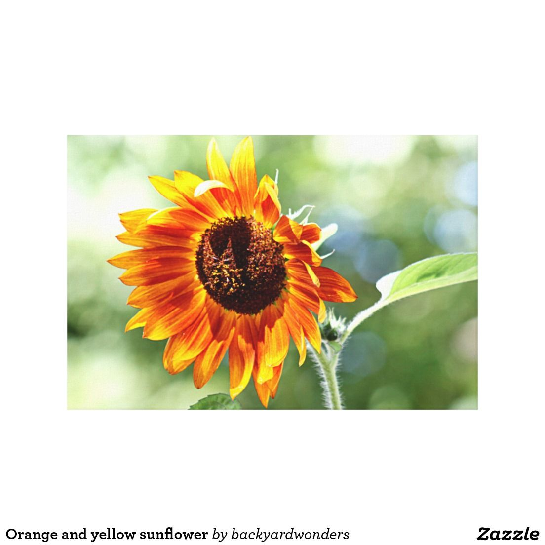 Orange and yellow sunflower in the late summer sun - colorful flower, soft background canvas print