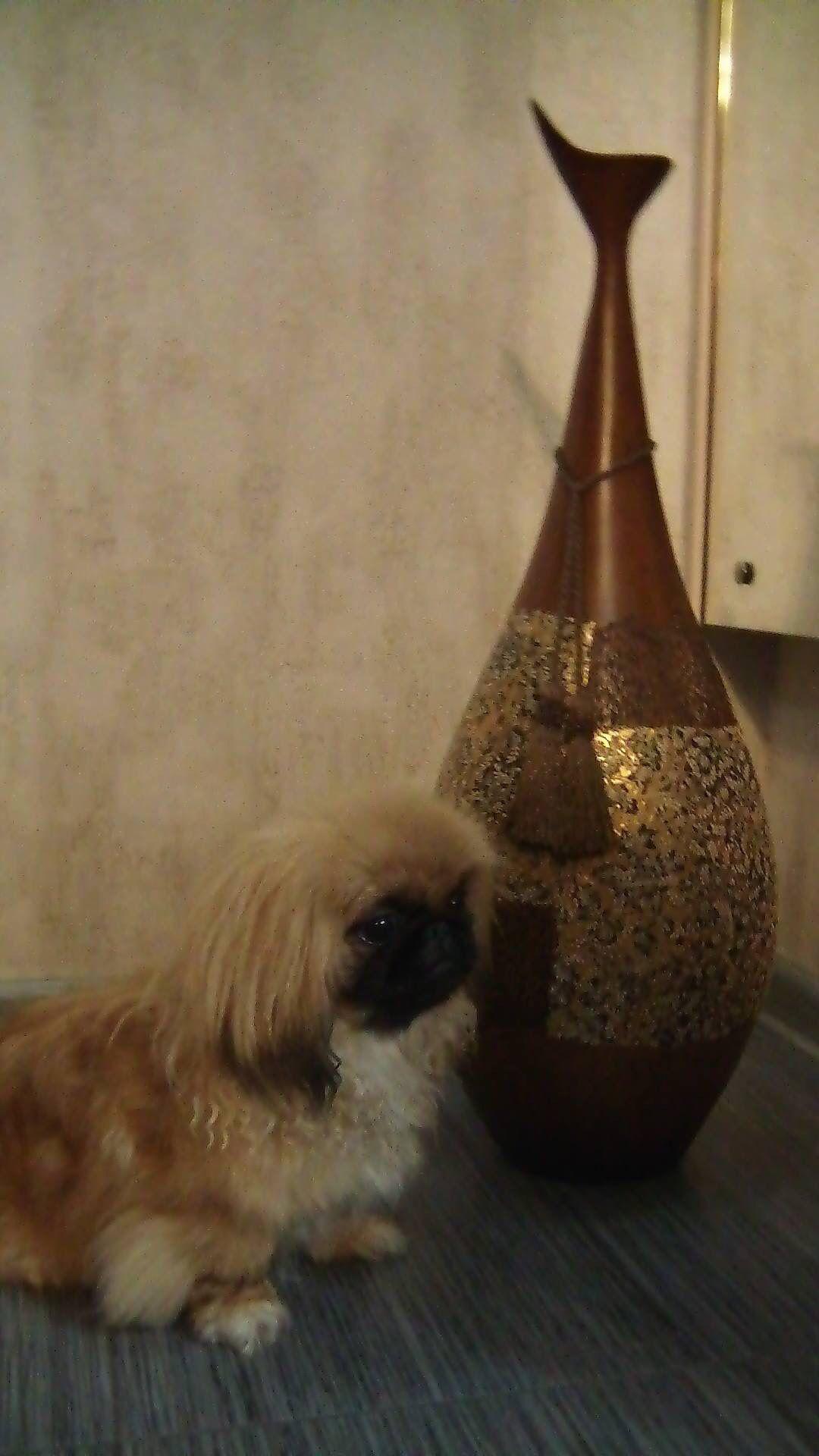 Two Examples Of Asian Art Pekingese Pekingese Dogs Tiny Monkey