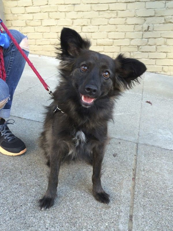 Oliver the possible Keeshond mix Animals, Dogs, Dog days