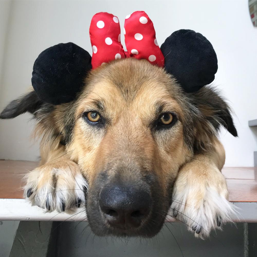 #dog #dogs #dogsofinstagram #puppy #dogcostume #halloween #adorable #puppies