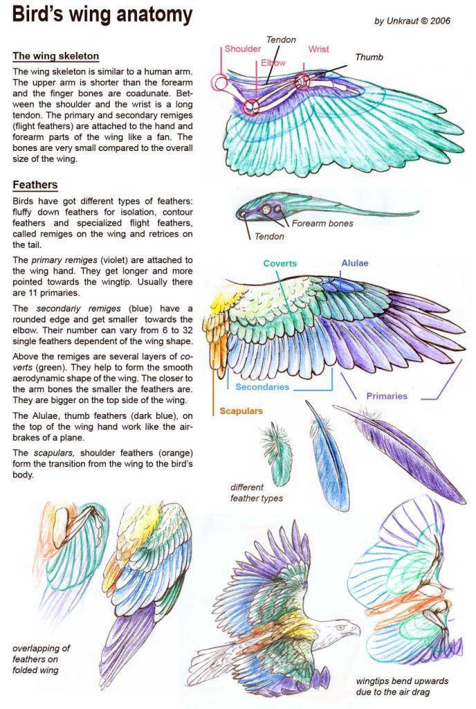 Feather description | Art | Pinterest | Anatomie, Vogel und Natur