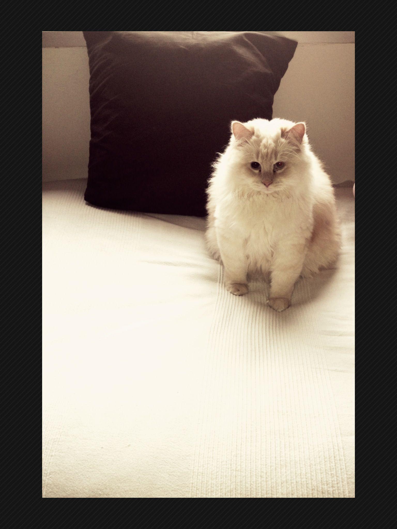 yeahh soy el rey de los gatos!!