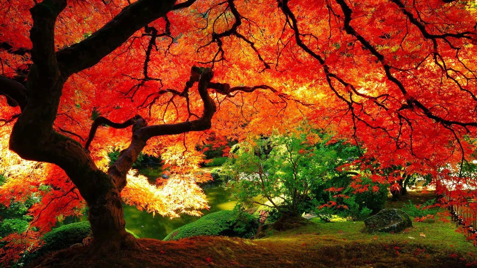 Desktop Backgrounds Wallpapers Autumn Scenery Nature Desktop Beautiful Nature