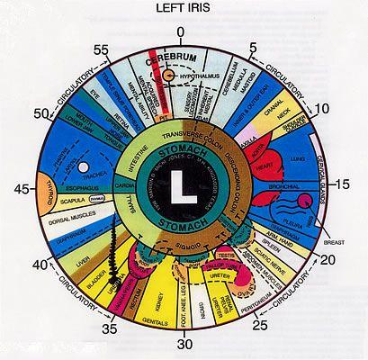 An example iridology chart for the left eye also health rh pinterest