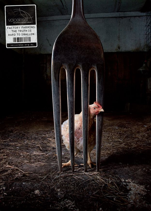 animal abuse posters ideas - photo #33