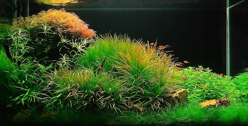Aquascaping Japan | Bubbles Aquarium   Aquascapes (2008 Aquascaping Gallery)