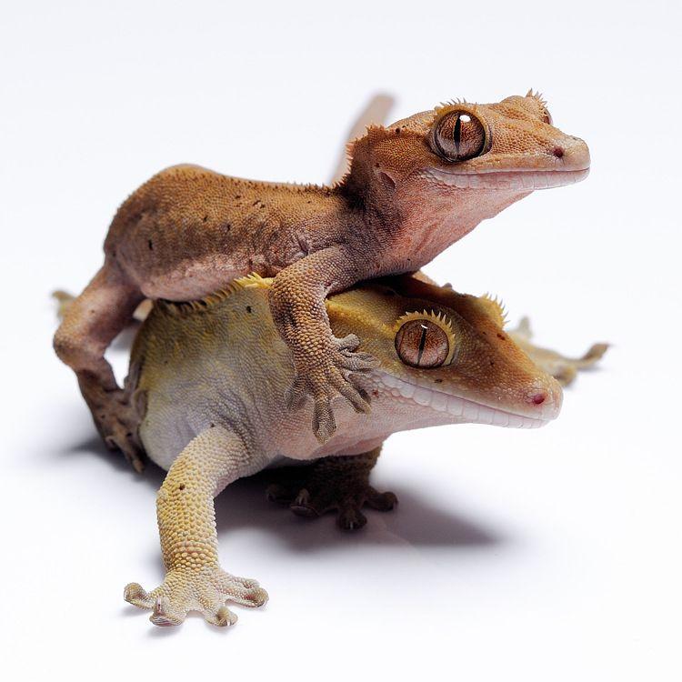 Hé baby ! | reptiles | Pinterest | Naturaleza