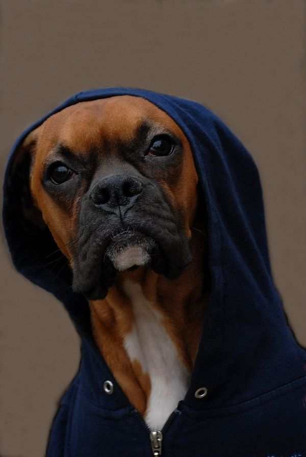 22 Pictures of Gangsta Dawgs