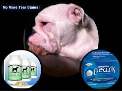 English Bulldog Food English Bulldog Allergies English Bulldog