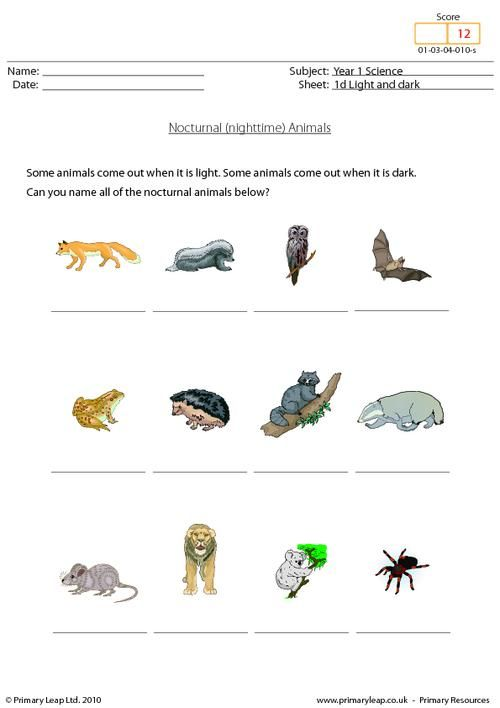 Year 1 Science - Nocturnal animals. Primary resources from www ...