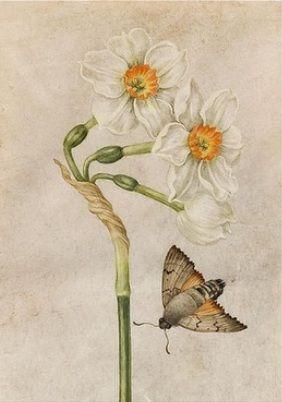 daffodil and moth