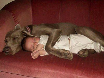 Baby and dog cuddling