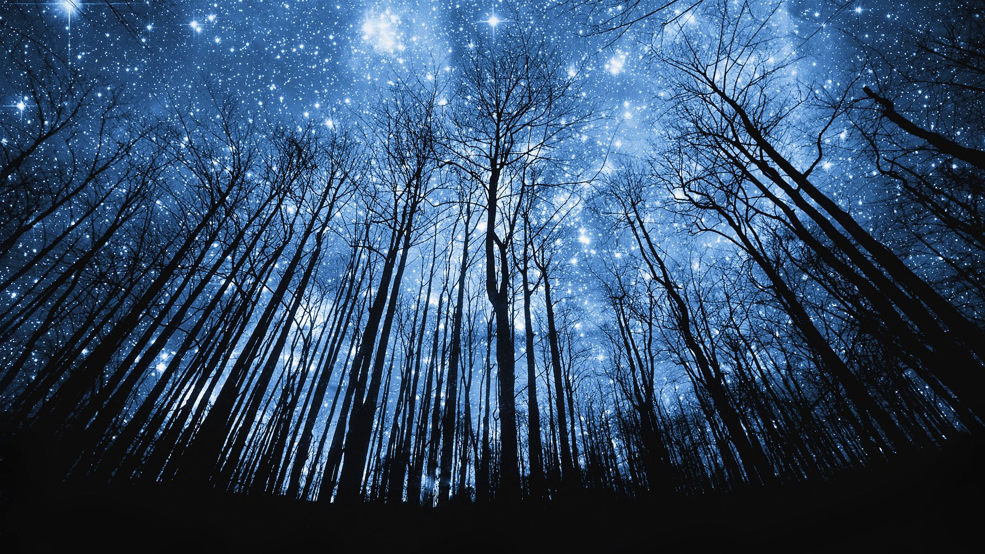 Pin By Michael Altman On Nature To Paint Night Sky Wallpaper Starry Night Wallpaper Starry Night Sky Wallpaper starry sky stars forest night