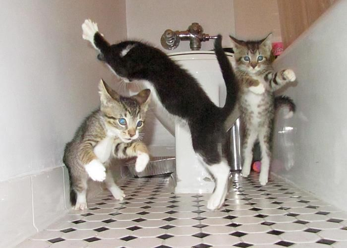 what your cats do when you're not at home. P.A.R.T.Y!