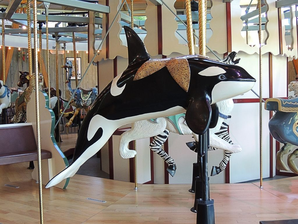 National carousel association denver zoo carousel african wild dog - Victoria Bc S Butchart Gardens Orcas Are Even More Impressive In Person