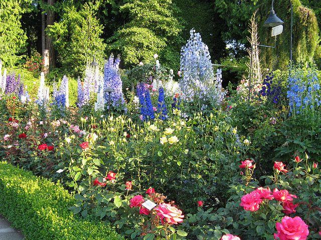 butchart+gardens+delphinium | Rose Garden, Butchart Gardens | Flickr - Photo Sharing!