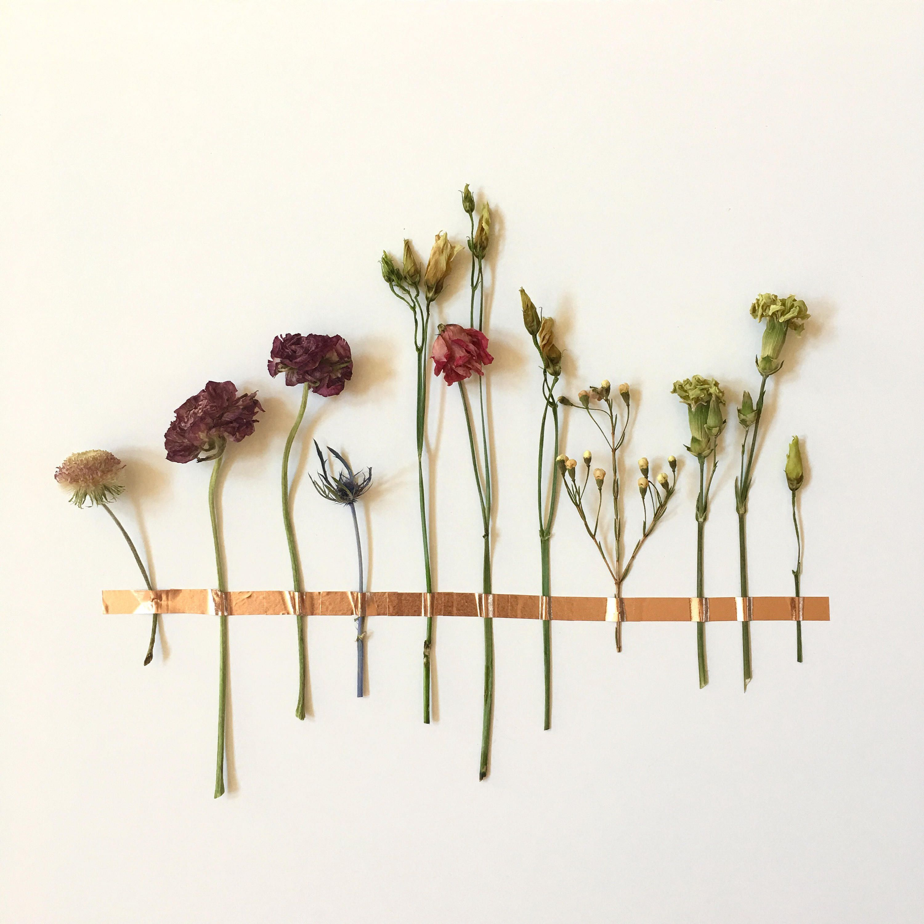 A Colorful Assortment Of Dried Flowers Affixed To Any Flat