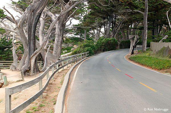 17 Mile Drive California Travel California Coast West Coast Road Trip California Travel