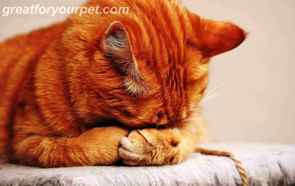 Discover The Best Cat Food For Sensitive Stomach To Buy In 2018 And Pick Up A Great Bargain This Year Updated In 2020 Best Cat Litter Cat Sleeping Kittens Cutest