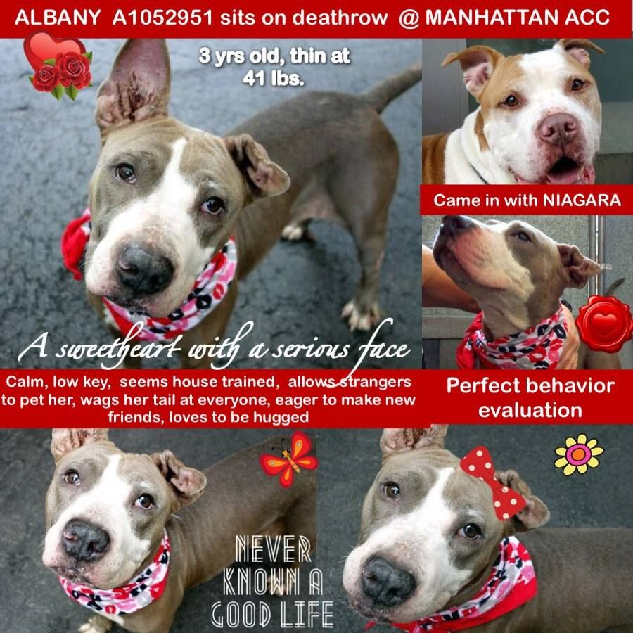 ALBANY A1052951 Manhattan TO BE DESTROYED 10/11/15 A