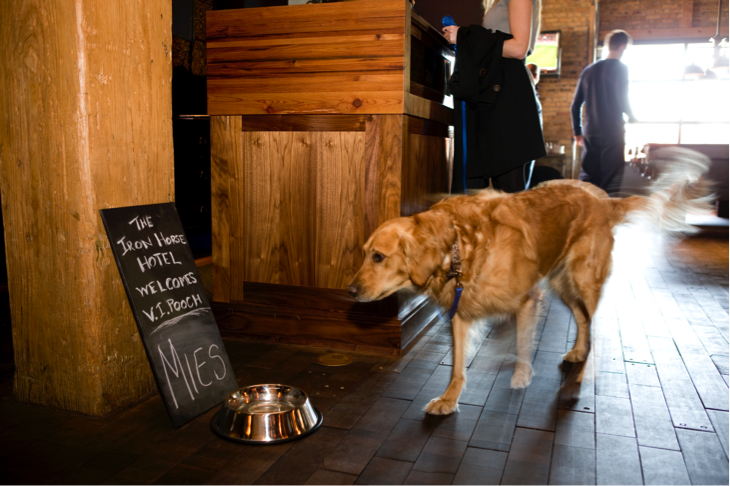 Charlie Reads The Welcome Board For Dogs At Iron Horse Hotel Photo By Tom Mcwilliam In Milwaukee Wi