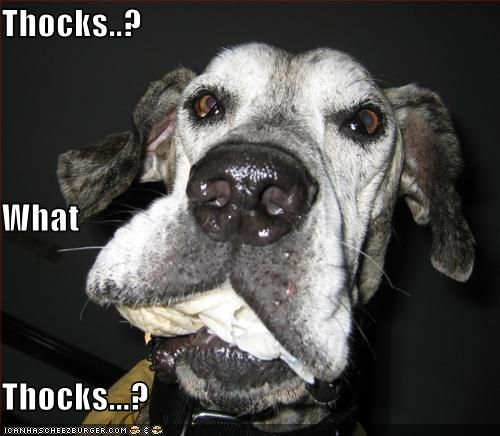 Untitled Great Dane Dogs Funny Dog Pictures Funny Dogs