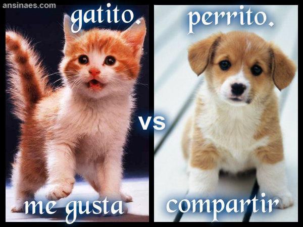 Gatito Vs Perrito Ansinaes Com Animals Cats Dogs