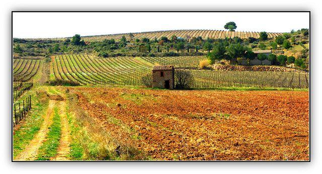 #CazoulslesBéziers #Hérault #LanguedocRoussillon #France #Francia #França by Gérard Farenc via Flickr #GlobeTripper www.globe-tripper.com